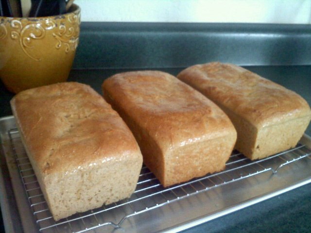 http://www.barefeetinthekitchen.com/2011/05/honey-whole-wheat-bread.html