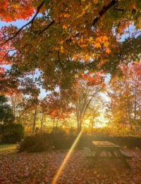 Ohio 229 featured